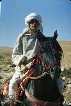 Cass ole as The Black Stallion aka Shêtân. Horse Movies, Horse Books, Black Stallion Movie, Beautiful Creatures, Animals Beautiful, Arabian Beauty, Most Beautiful Horses, Black Horses, Cute Horses