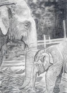 Print of elephants pencil drawing. Animal Sketches, Animal Drawings, Art Sketches, Pencil Drawings Of Girls, Pencil Drawing Tutorials, Drawing Hands, Drawing Eyes, Eyes Closed, Elephant Eye