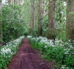 Forêt jpg