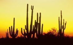 arizona desert wallpaper - Google Search