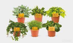 Product - Succulenten