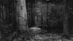 "Hiroshi Sugimoto - Photography - ""Still Life"""