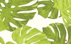 FREE palm leaf desktop background! — Make Hey