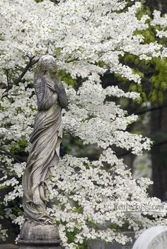Photo Gallery: Easter morning at Lexington Cemetery
