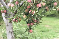 'Tis the season! Here's everything you needed to know about apples this Fall.