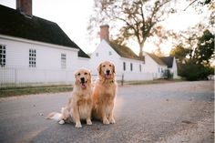 Instagrammable Places in Williamsburg | Visit Williamsburg Dogs Day Out, Mill Park, Lookout Tower, Car Travel, Travel Tips, Ghost Tour, Colonial Architecture, Colonial Williamsburg, Beautiful Places To Visit