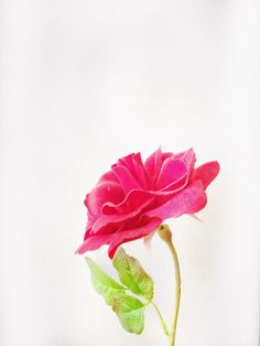 flowers iPhone photo contest-03