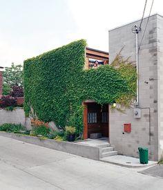 A narrow garden and climbing ivy soften and brighten the house's blank front facade.  Photo by Juliana Sohn.