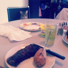 They make great dinner dates… | 27 Reasons Your Cat Makes The Best Valentine