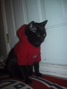 Chat à capuche, photo soumise par Jenilee Meagher / Habs hoodie cat, submitted by Jenilee Meagher