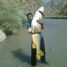 Now that's a huge fish