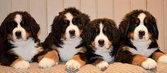 Baby Berner girls
