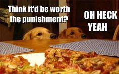 Funny animal captions, animal pictures with captions, lol animals