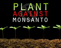 Plant against #Monsanto. Start a permaculture garden full of heirloom  vegetables and fruits, herbs and roots, nuts and seeds. If you don't know what permaculture is, check out my permaculture board for lots of info.