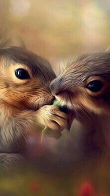 Squirrels Sharing