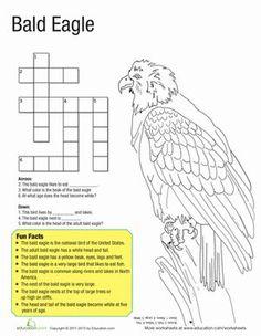 Bald Eagle Coloring Worksheets | Bald Eagle Facts