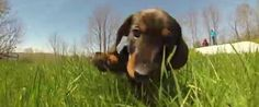 Puppies Frolicking With A GoPro Will Make Any Day Better