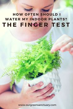 Almost everyday I get asked the same question, how often should I water my indoor plants? The finger test will help you determine when to water your plants. Water Me, Indoor Plants, This Or That Questions, Green, Medium, Big, Plants, Inside Plants, Medium Long Hairstyles