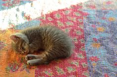 Kitten sleeping on a quilt -- training to be a feline Quilt Inspector starts early. :-)