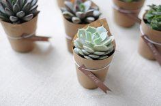 Plantas como lembrancinhas - suculentas