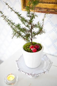 Potted tabletop tree with red toadstools and moss // via hildas hem