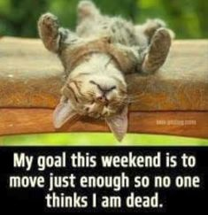 Weekend Quotes : Funny quote with cats. - Quotes Sayings Funny Animal Memes, Cute Funny Animals, Funny Animal Pictures, Funny Memes, Jokes, Haha Funny, Funny Cute, Hilarious, Funny Stuff