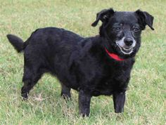 Tuesday's Tails:  Adopt This Sweet Dachshund Mix!