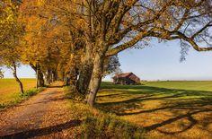 Tree-lined lane in autumn (Allgäu, Bavaria, Germany) by Andreas Thoma on 500px