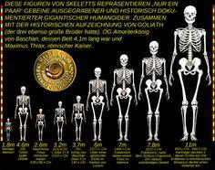 Abb. 10 - Verschiedene Arten von humanoiden Giganten als Teil der Historie auf der Erde. Homo Sapiens Sapiens, mit der bescheidenen Größe von 1.8m ist auf der linken Seite abgebildet.