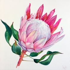 Drawing Flowers & Mandala in Ink - Drawing On Demand Drawing Flowers Protea Art, Protea Flower, Botanical Flowers, Botanical Art, Flower Mandala, Flower Art, Watercolor Print, Watercolor Flowers, Floral Drawing
