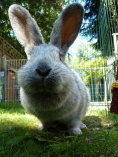 Bunny Is on a Sense Mission with Those Whiskers and Ears - January 10, 2012