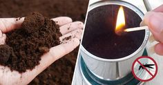 4 Genius Ways to Recycle Used Coffee Grounds Amazing Apple Brownie Coffee Creative Genius GlutenFree grounds IceCream Italian Leger Light Minceur Mini Pumpkin Raspberry Recycle Thanksgiving Ways Weihnachten Uses For Coffee Grounds, Coffee Uses, Coffee Grounds Beauty, Garden Bugs, Garden Pests, Garden Planters, Coffee Grounds As Fertilizer, Apple Brownies, Natural Insecticide