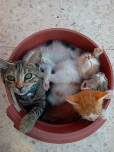 Momma and her precious little baby kittens