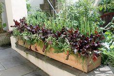 edible windowbox