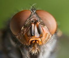 Fly Portrait (click for larger version)