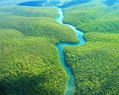 The Amazon Rainforest - Brazil