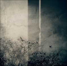 """"""" Be humble for you are made of earth. Be noble for you are made of stars. """"— Serbian proverb, photo Agnieszka Motyka"""