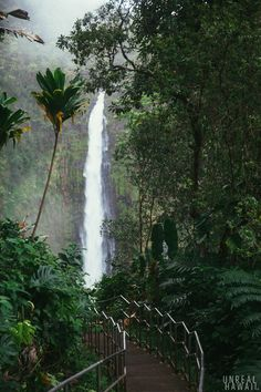 Akaka Falls -  Hawaii. Picturesque waterfalls easily accessible via a paved path. There are steps involved. It's set up so that almost anyone can do it. If you feel like taking a stroll, you might as well take the Circle Route that's just under half a mile.