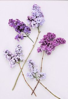 We love lilacs!