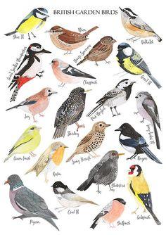 British Birds  Watercolour Art Print