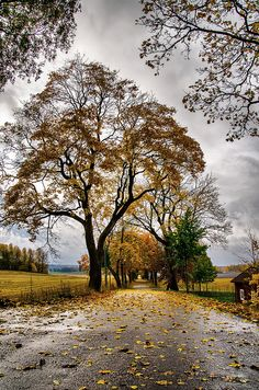 3foldlaw: Autumn road by Lars-Ove Törnebohm
