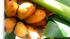 Niue ripe bananas