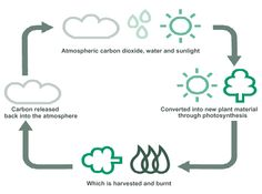 Carbon cycle basic diagram introduction to electrical wiring the carbon cycle economics of agriculture pinterest cycling rh pinterest com carbon cycle block diagram carbon ccuart Choice Image