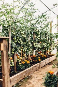 99 unusual vegetable garden ideas for home backyard 30 perfect small backyard garden design ideas Garden Types, Veg Garden, Garden Cottage, Garden Beds, Potager Garden, Vegetables Garden, Farmhouse Garden, Tomato Garden, Garden Planters