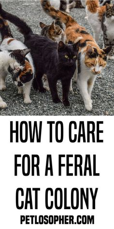 Feral cats are a double-edged sword. Many people consider them vermin, but once a population has settled into an area, odds are feral cats will remain indefinitely, even if the initial group … Feral Cat House, Feral Cats, Feral Cat Shelter, Cat Toilet Training, How To Cat, Cat Care Tips, Pet Care, Animal Help, Outdoor Cats