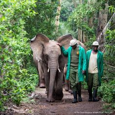 raising orphan elephants to save the species. Jungle Animals, Animals And Pets, Baby Animals, Elephants Never Forget, Save The Elephants, Elephant Party, Baby Elephant, Endangered Elephants, Adopt An Elephant
