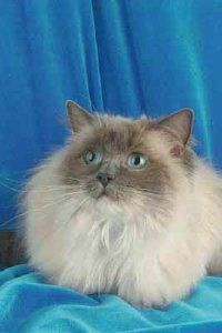 Cat Grooming Tips General Care Animal Planet Catadoptiontips Cats And