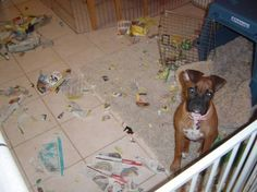"""""""The cat did it.""""  (boxer)"""