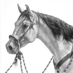 Karmel Timmons: Equestrian Art