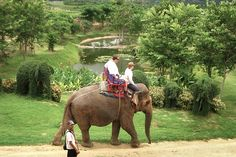 Elephants and Wine. Together Forever. | FATHOM Travel Blog and Travel Guides
